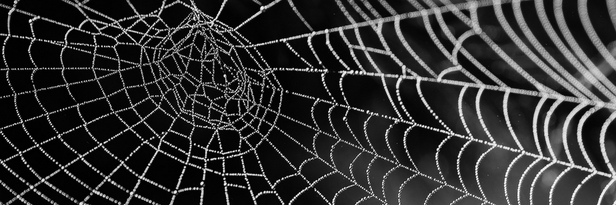 Crawl budget tela de araña-foto